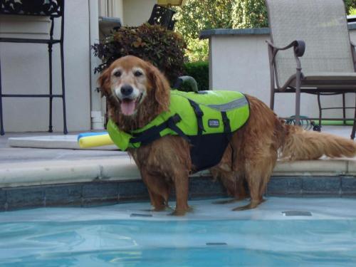 Abby swimming!