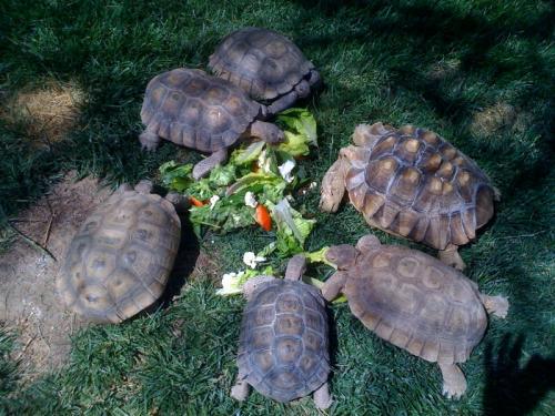 Dr yachs tortoises